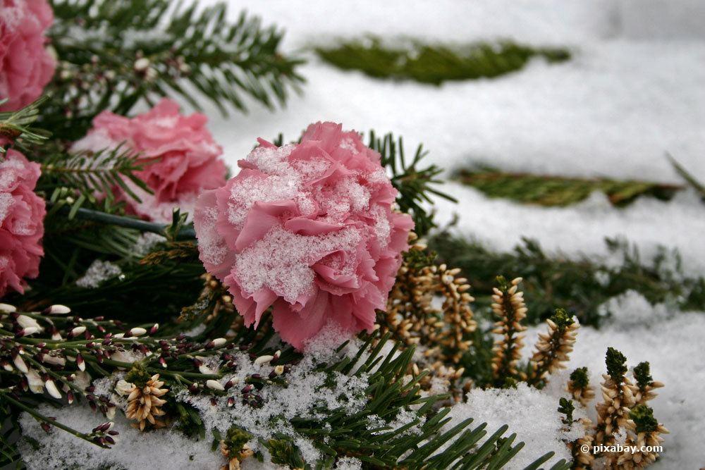 Grabbepflanzung im Winter