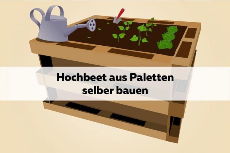 Hochbeet DIY Anleitung