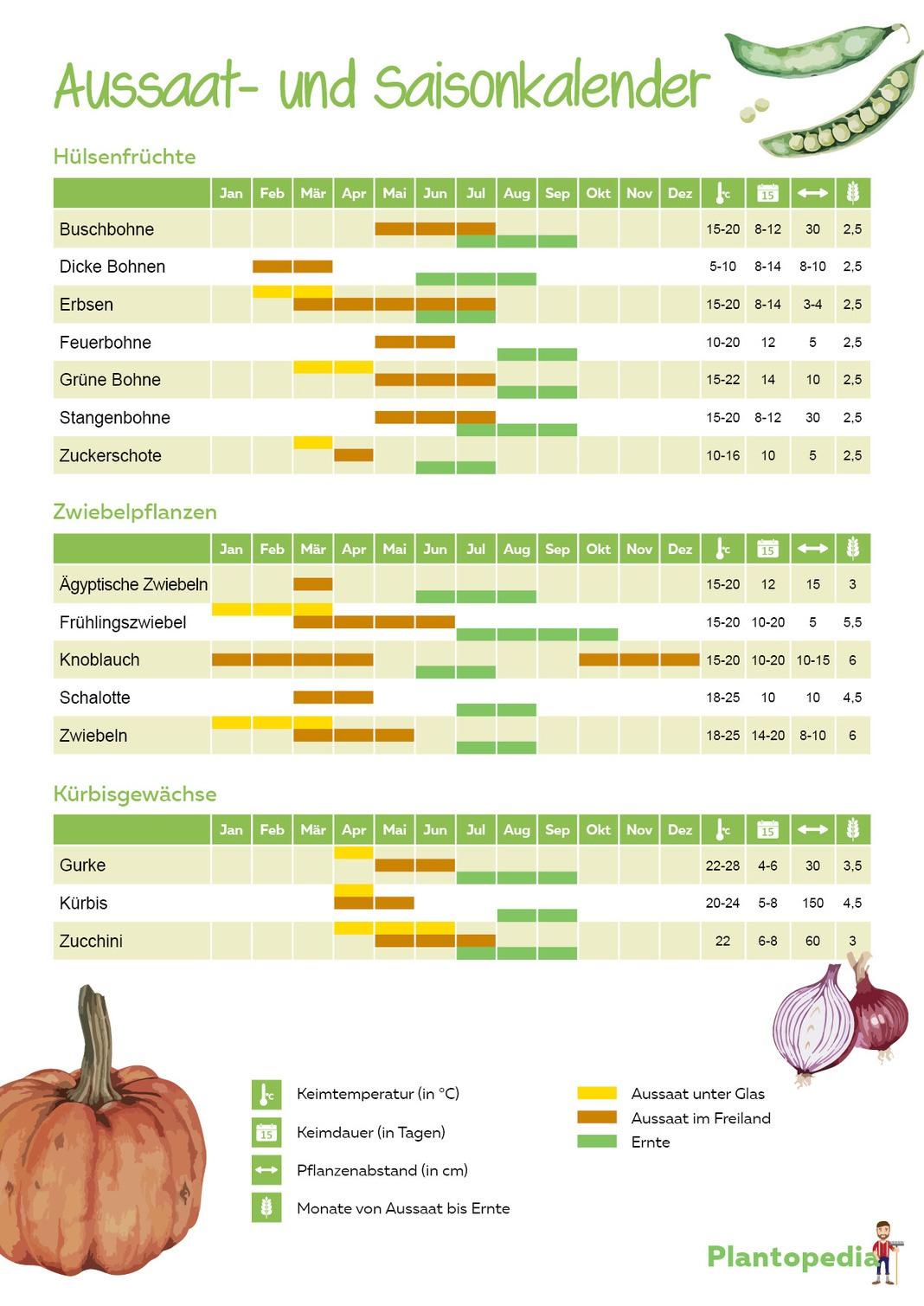 Aussaatkalender Gemüse