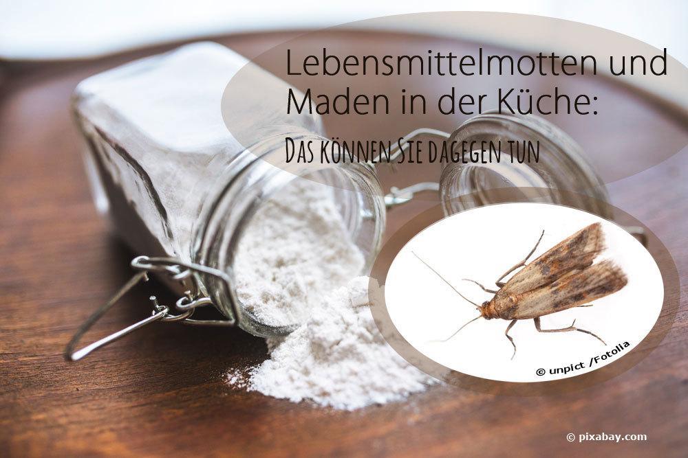 Lebensmittelmotten und Maden von Motten in der Küche: was tun?