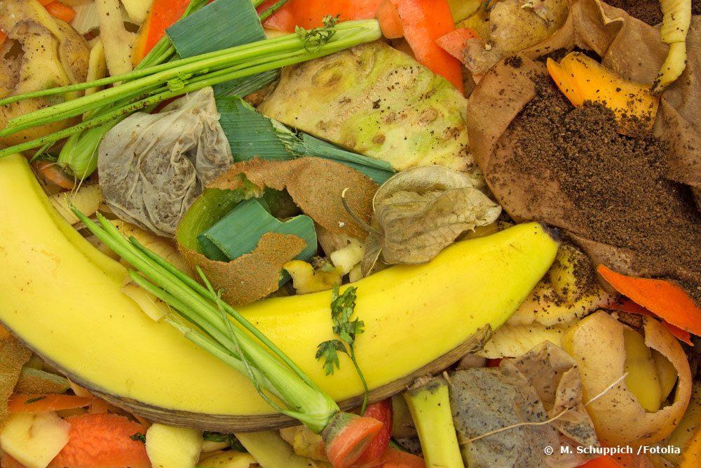 Top Maden im Müll: woher sie kommen und wie sie entstehen | Info OQ15