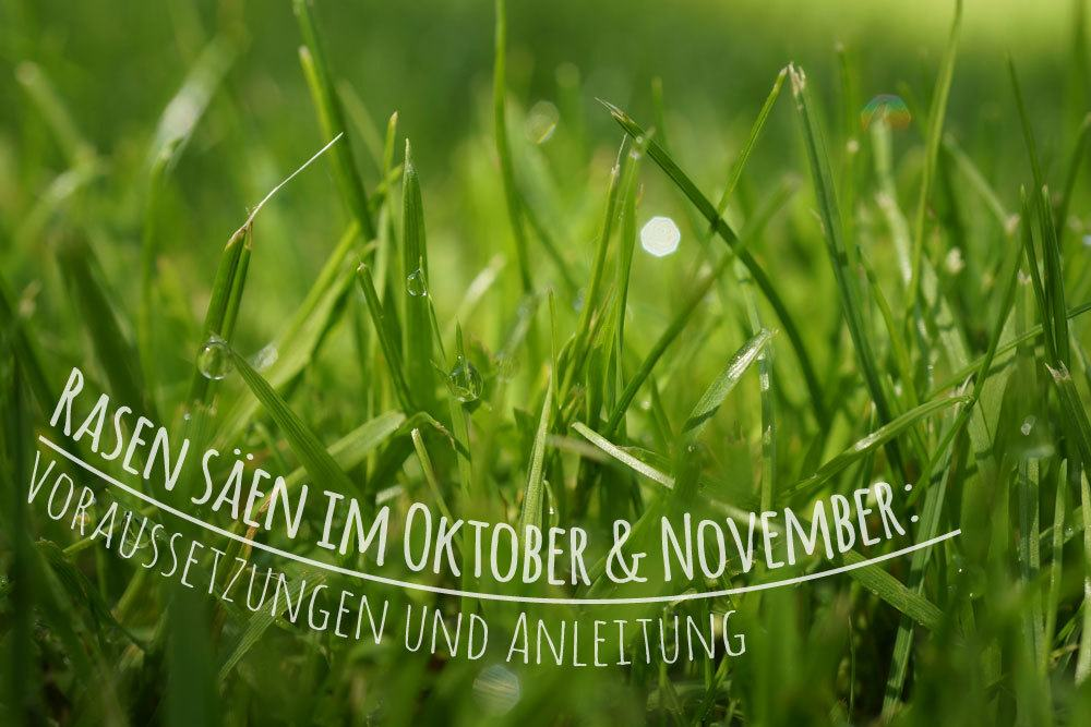 Rasen Säen Im Oktober : rasen s en im oktober und november voraussetzungen und ~ Watch28wear.com Haus und Dekorationen