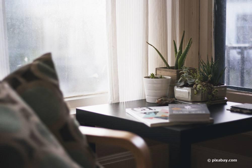 Gesunde Schlafzimmerpflanzen: 18 ideale Pflanzen fürs Schlafzimmer