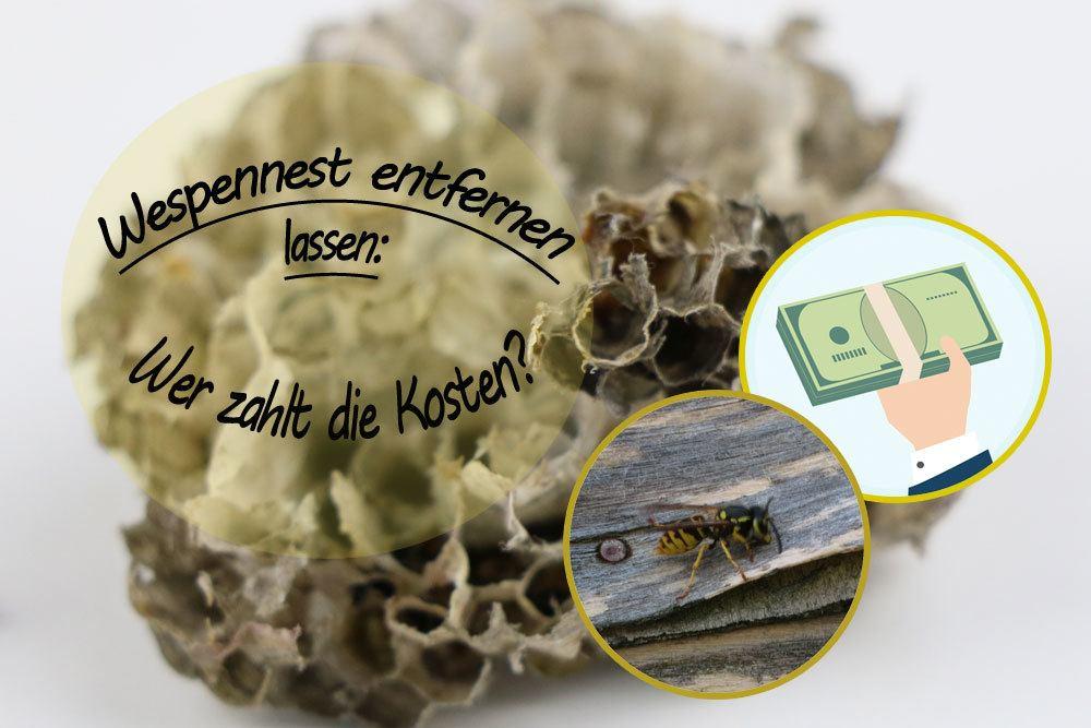 Kosten Wespennest Entfernen : wespennest entfernen lassen wer zahlt die kosten mieter vermieter ~ Watch28wear.com Haus und Dekorationen