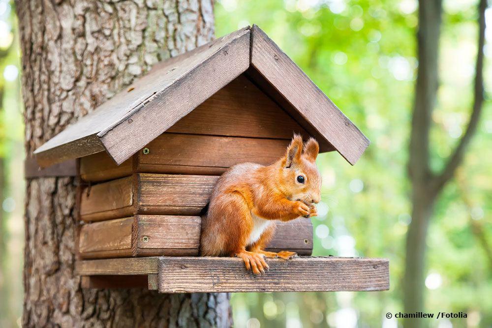 Eichhörnchen in Eichhörnchenhaus