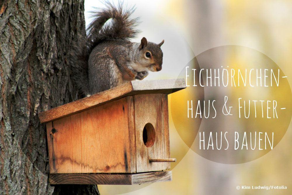 Eichhörnchenhaus bauen