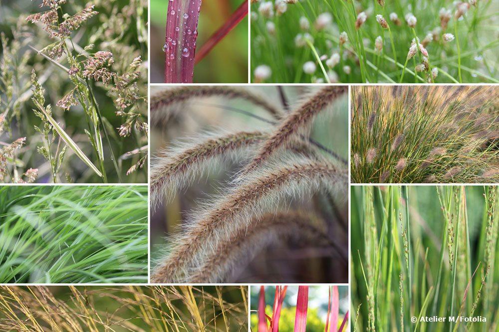 Gräser winterfest machen
