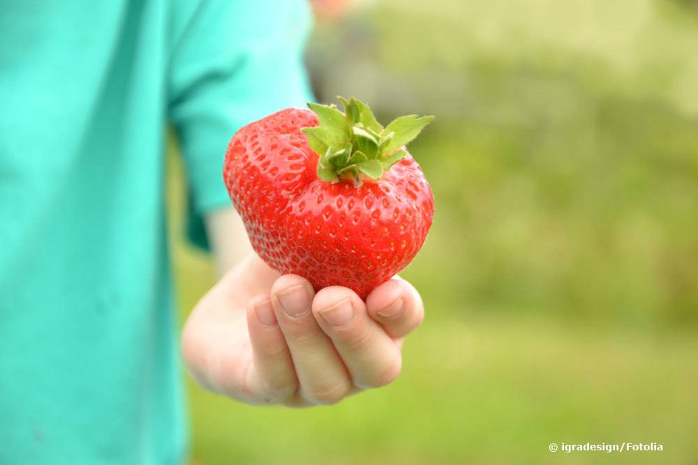 Erdbeere Korona