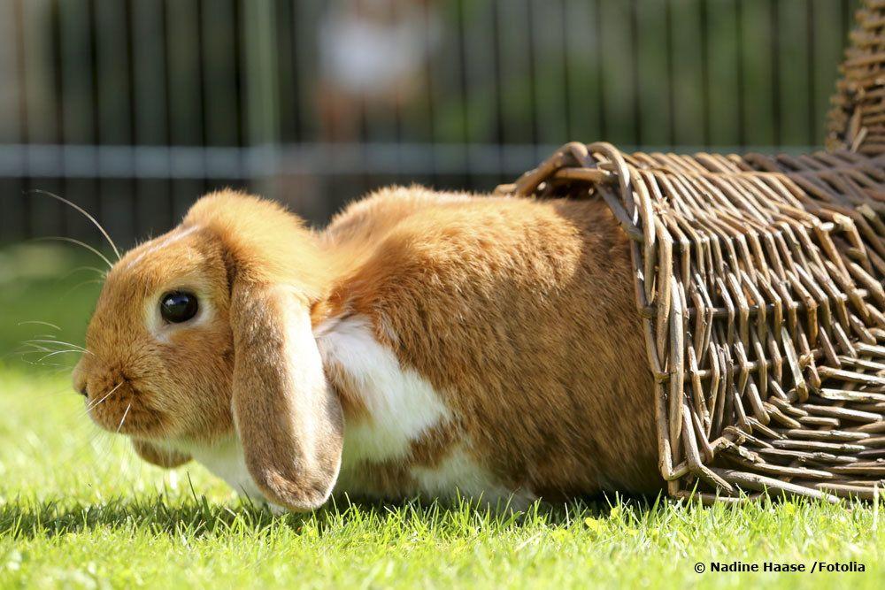 Kaninchen kommt aus Versteck
