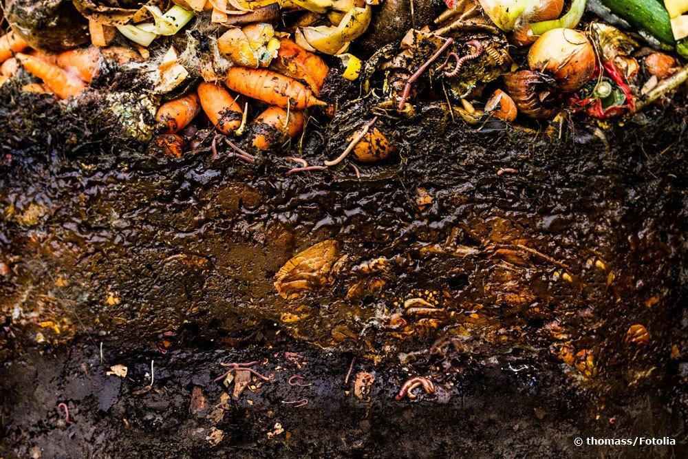 Würmer im Kompost
