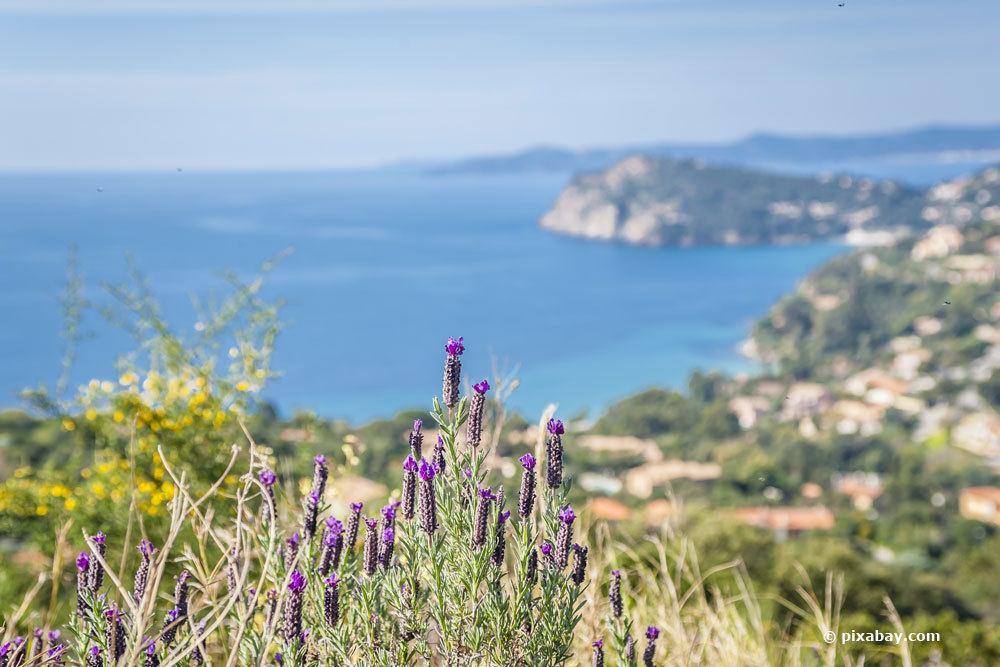 Lavendel in Spanien