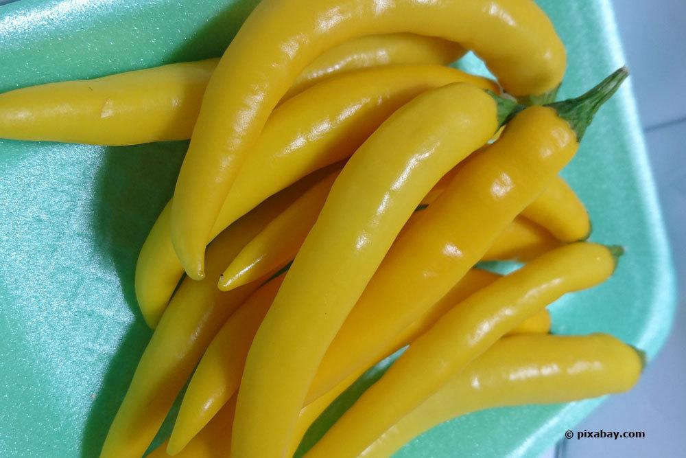 Chili 'Cayenne Golden'