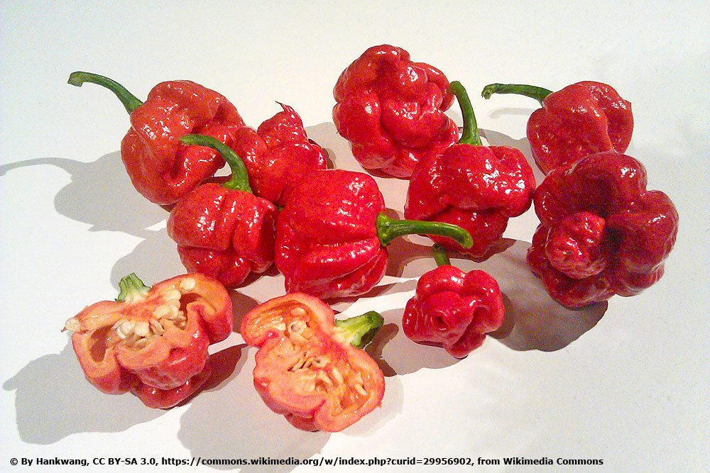 Chili 'Trinidad Moruga Scorpion'