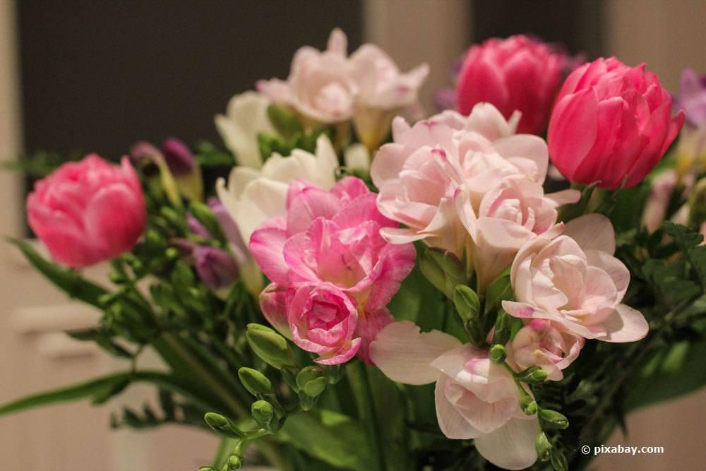 Freesien als Schnittblumen