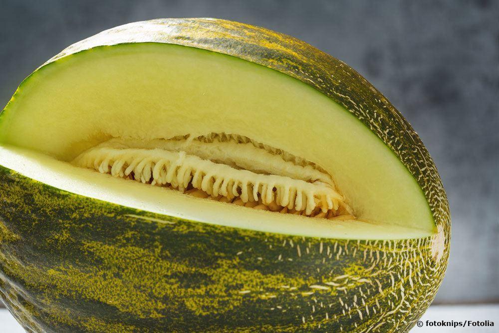 Futoro Melone