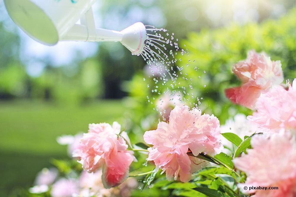 Gießkanne gießt Blumen