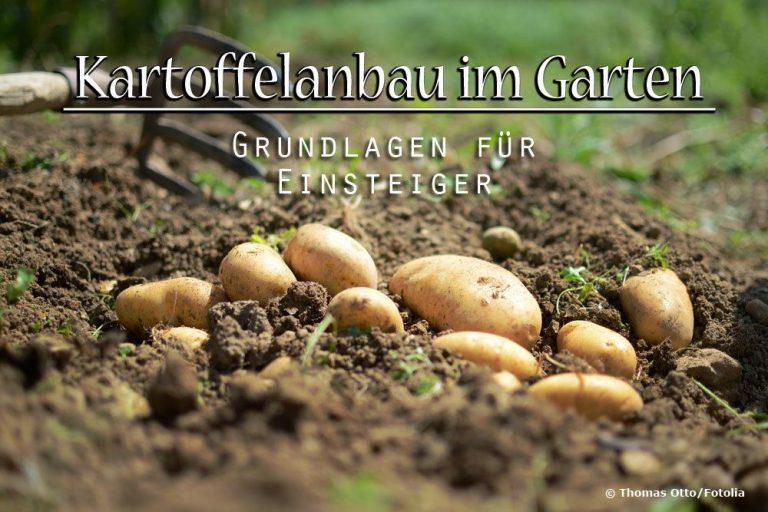 Kartoffelanbau Grundlagen
