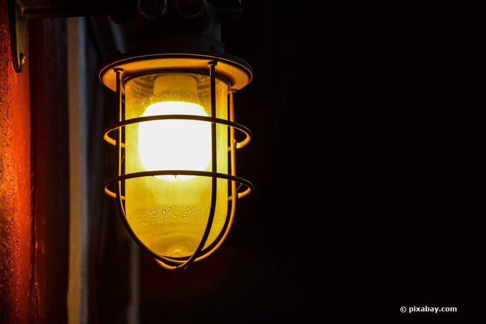 Hornissen werden durch Licht angezogen
