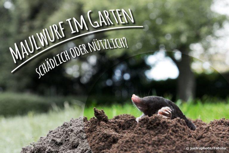 Maulwurf im Garten