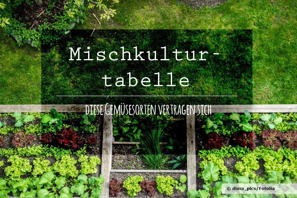 Mischkultur Gemüse
