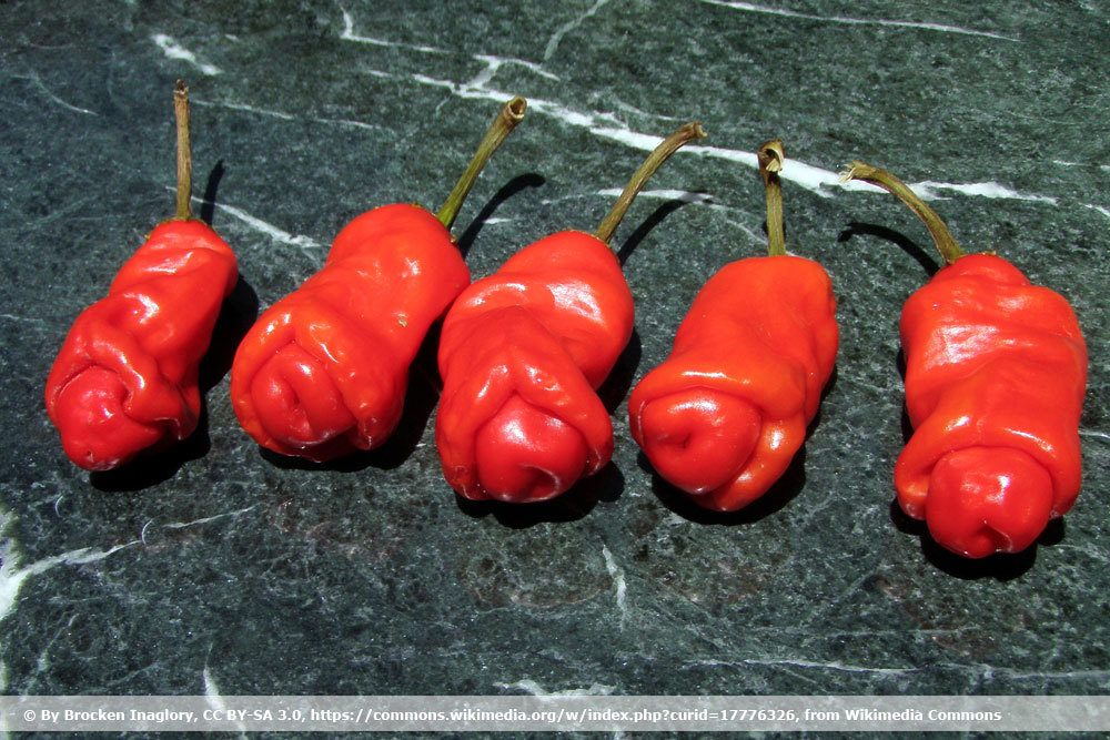 Chili 'Peter Pepper'