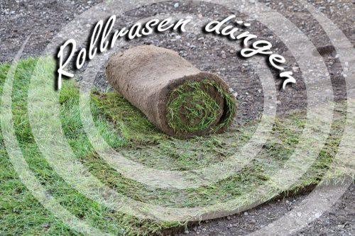 Rollrasen düngen