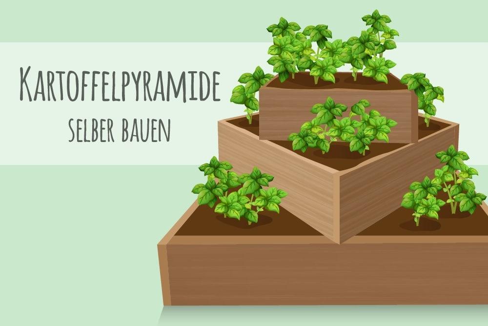 Kartoffelpyramide selber bauen