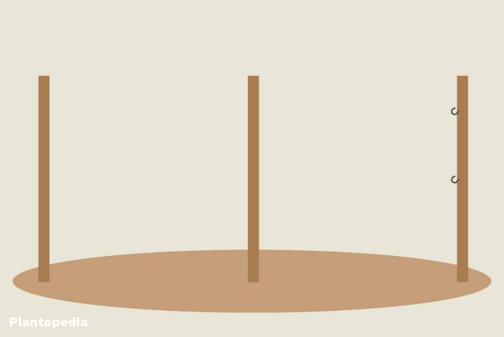 Klettergerüst Für Himbeeren : Rankhilfen für himbeeren klettergerüst knotengitter co
