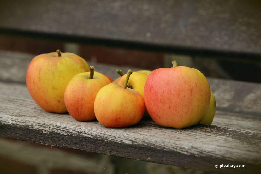 Apfelsorte Goldparmäne