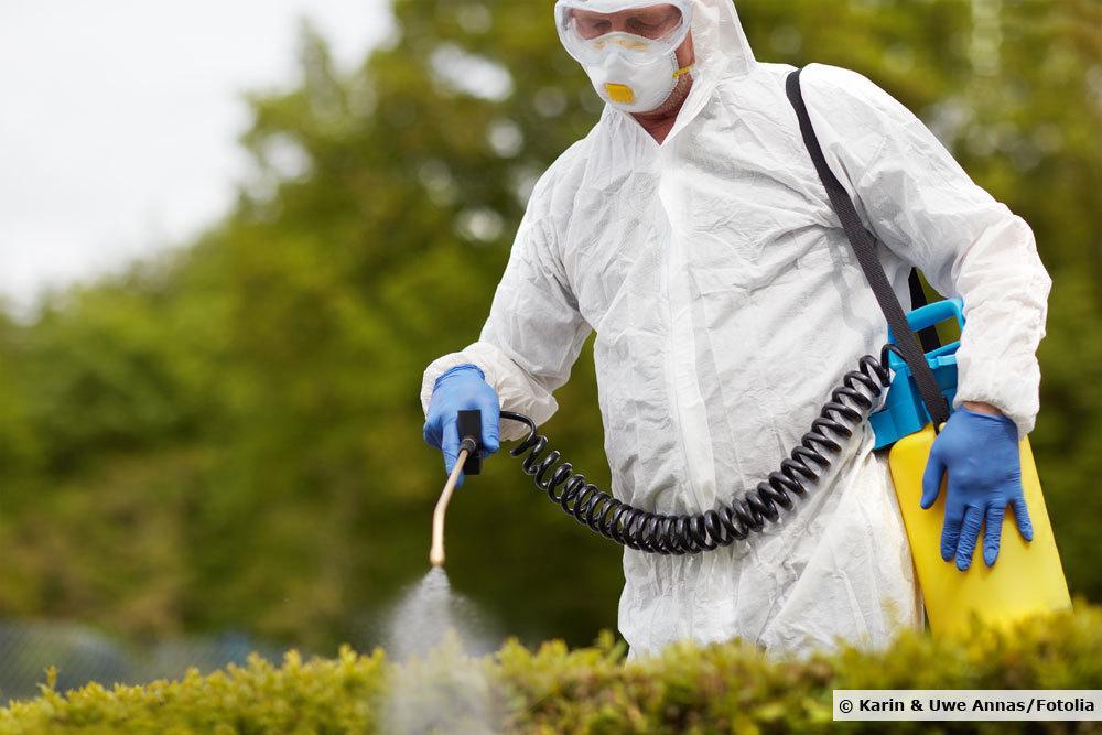 Einsatz von Fungiziden am Buchsbaum