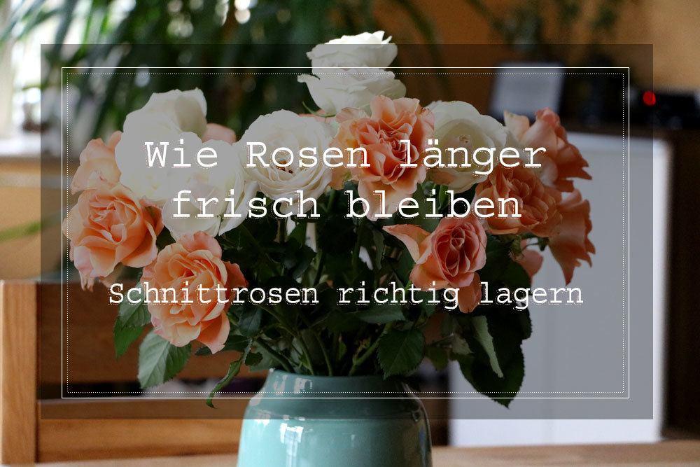 Rosen länger frisch halten