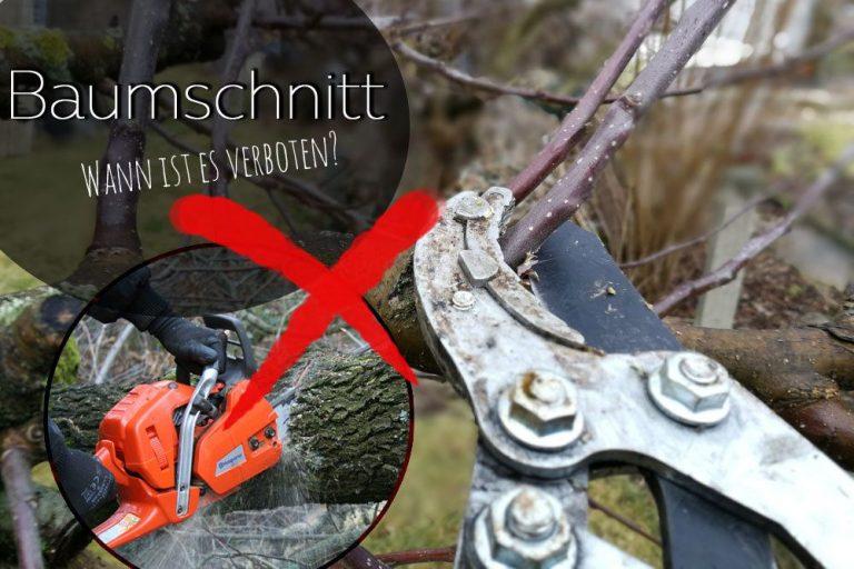 Wann ist Baumschnitt verboten?