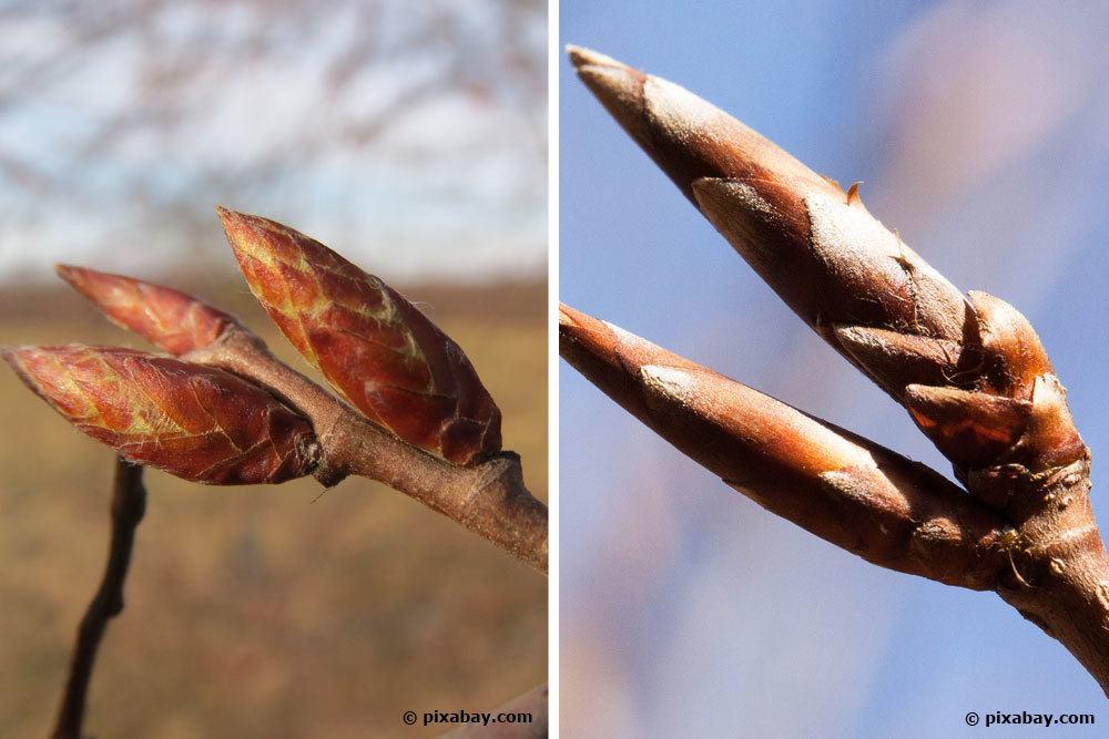 Top Welche Heckenpflanzen: Hainbuche oder Rotbuche? Unser Tipp @FY_78