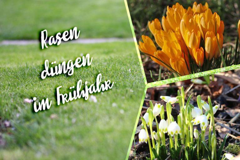Rasen düngen im Frühjahr