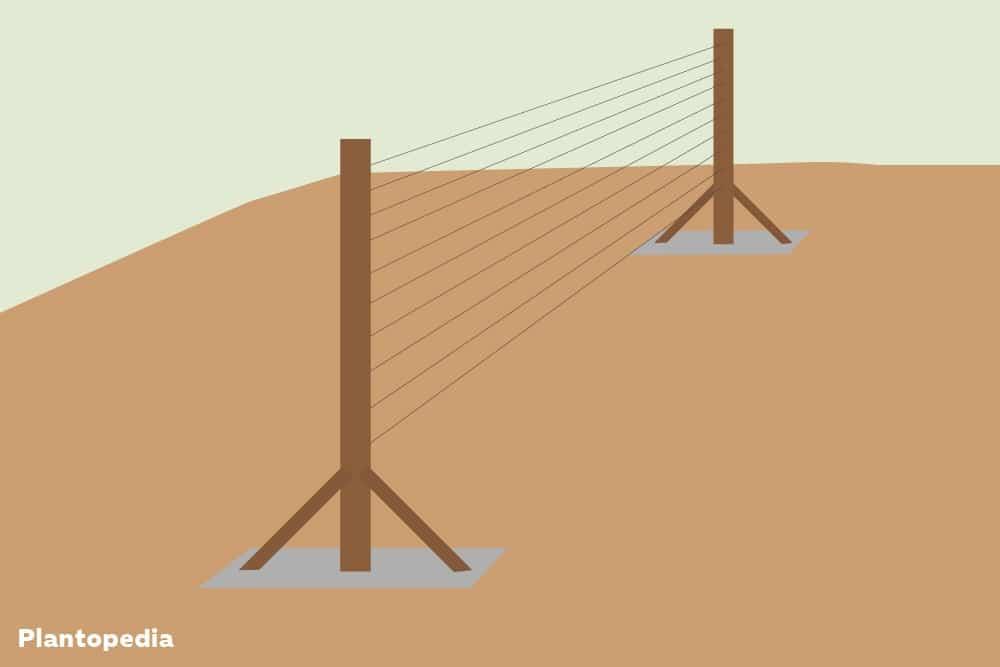 Spalierrahmen erstellen - Drähte spannen