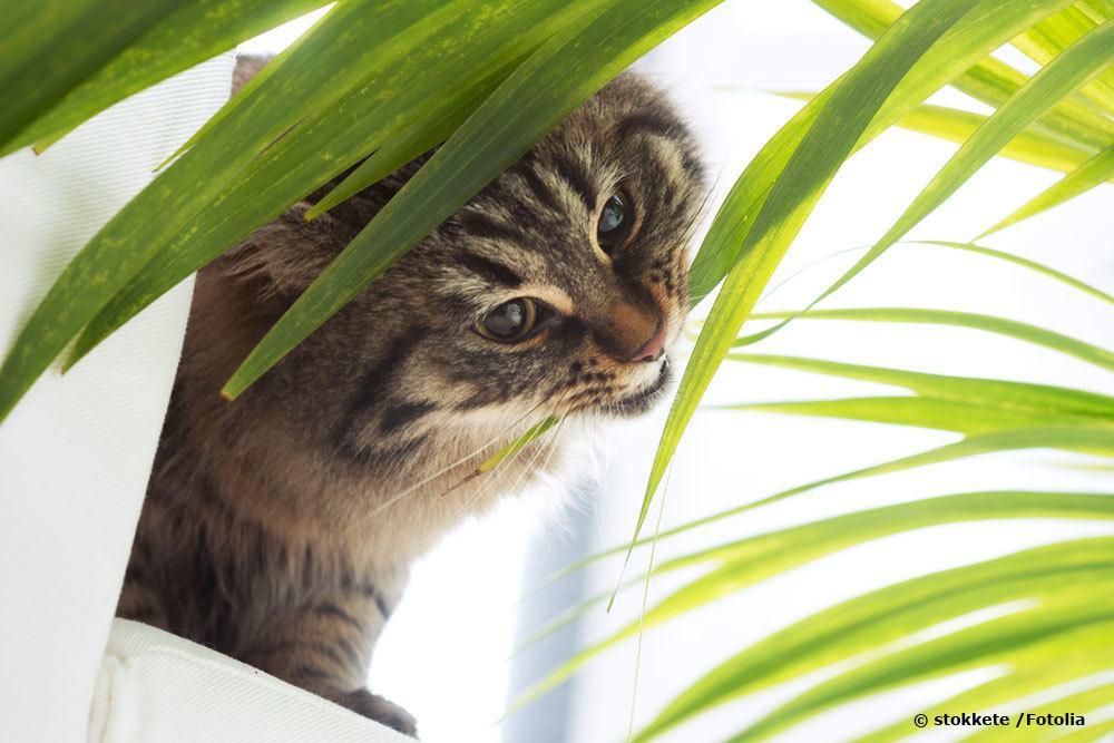 Ist Bambus giftig für Katzen?