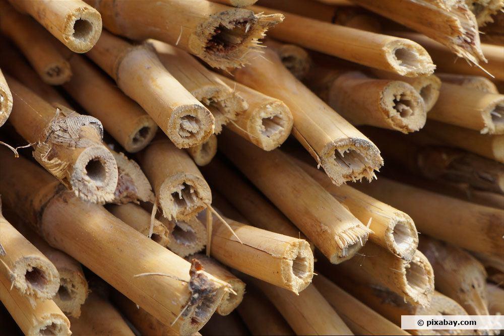 Bambus zuschneiden