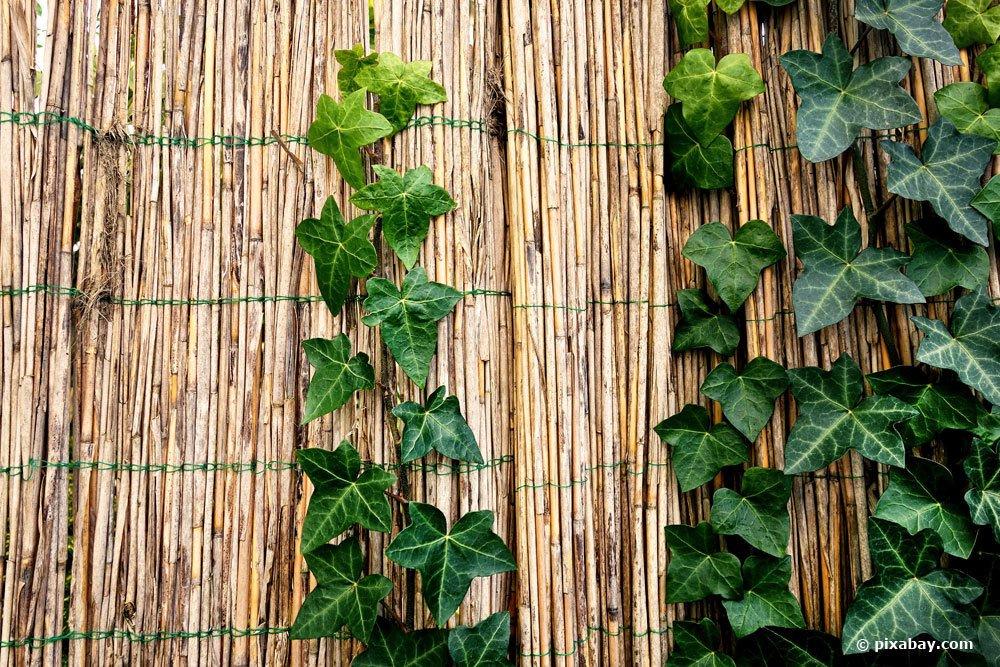 Bambuszaun als Sichtschutz