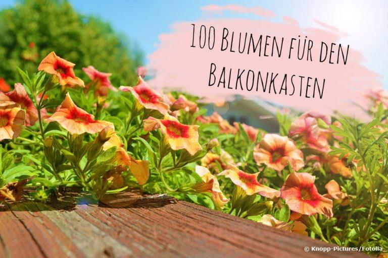 Blumen für den Balkonkasten
