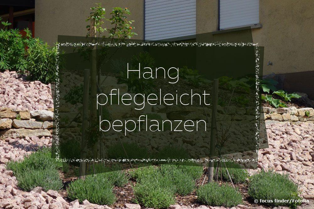 hang pflegeleicht bepflanzen  pflanzen fuer jede boeschung