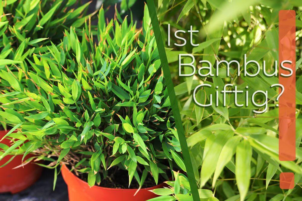 ist bambus giftig das ist zu beachten f r kinder hunde und katzen