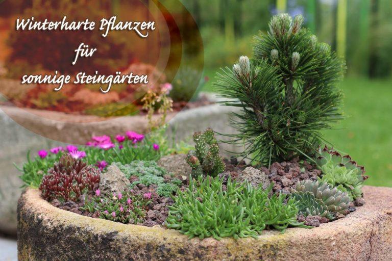 Winterharte Pflanzen für den sonnigen Steingarten
