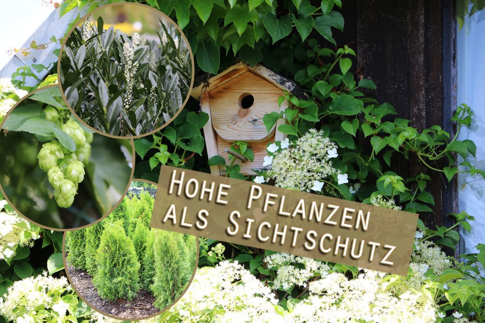 Pflanzen als Sichtschutz