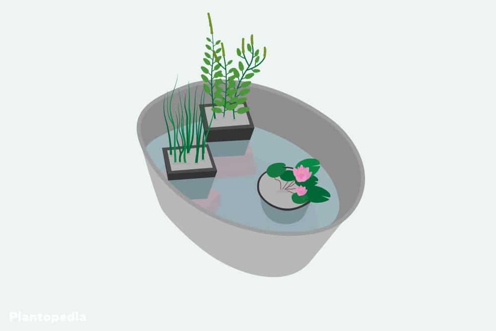 Zinkwanne mit Pflanzen bestücken