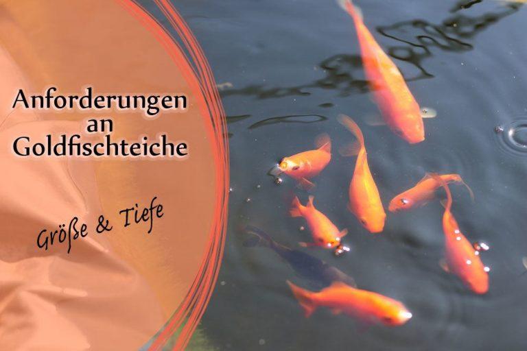 Anforderungen an Goldfische im Gartenteich