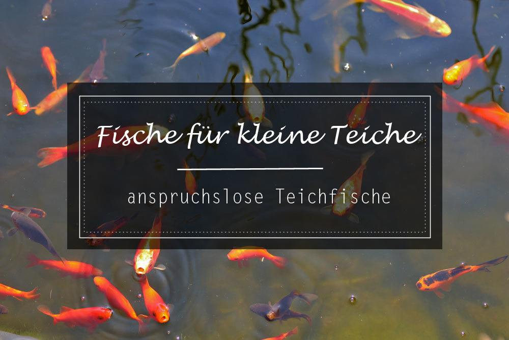 Fische für kleine Teiche