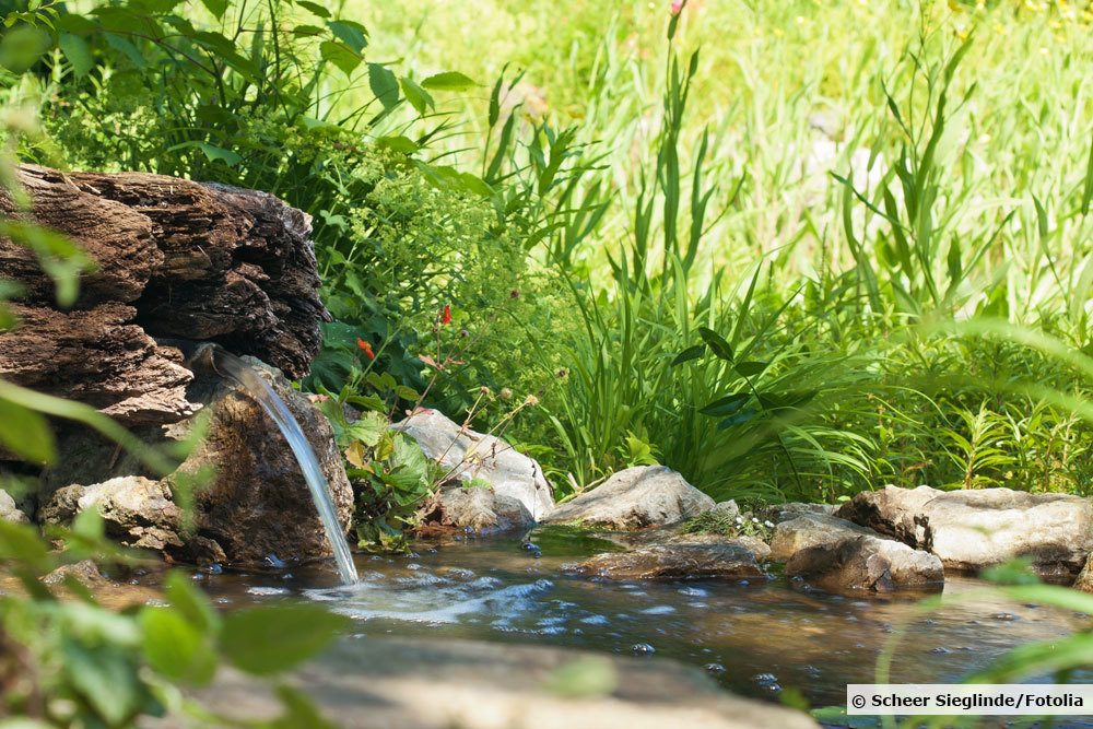 Schaum auf dem Teich
