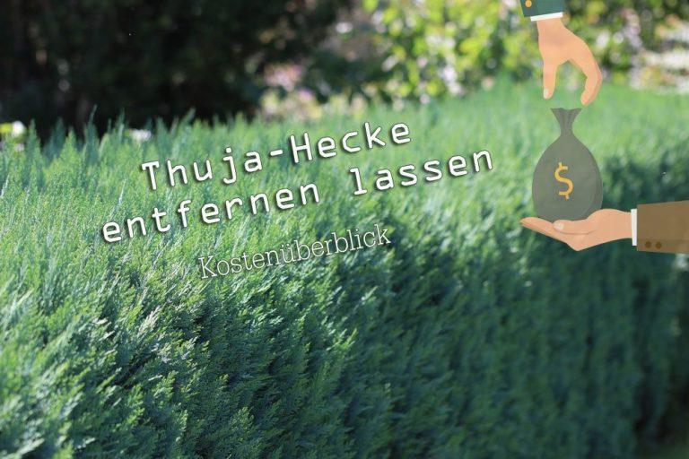 Thuja-Hecke entfernen lassen