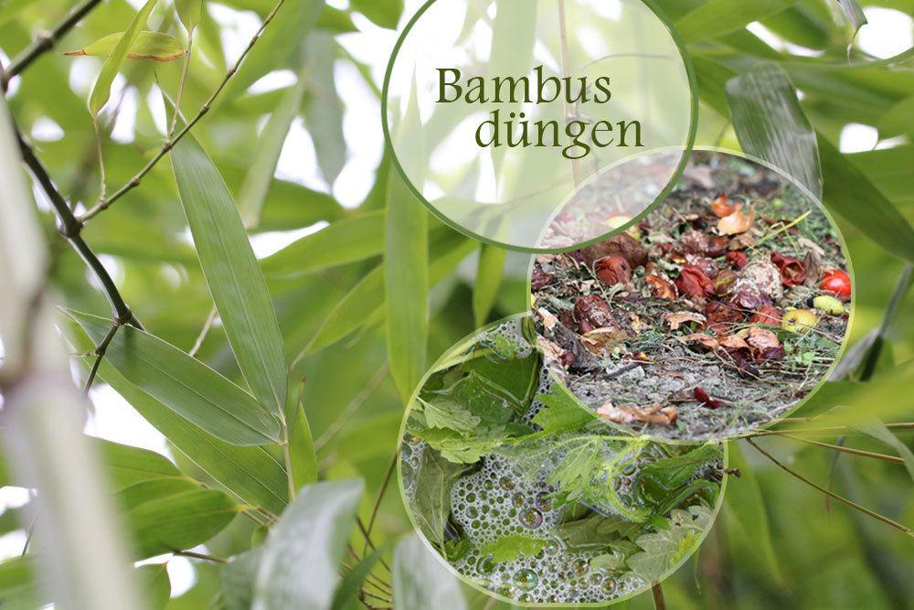 Bambus düngen