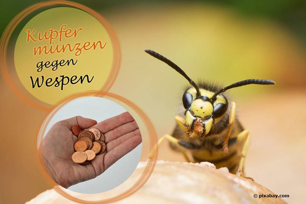 Kupfer Gegen Wespen